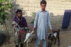 Sadam Khan 2 Goats Hattar