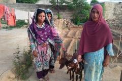 Shabbir 2 Goats Hattar
